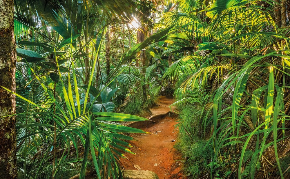 photo jungle